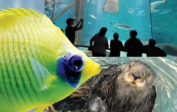 Audubon Aquarium of the Americas Family 4-Pack